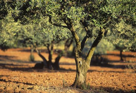 The Gift of Gethsemane