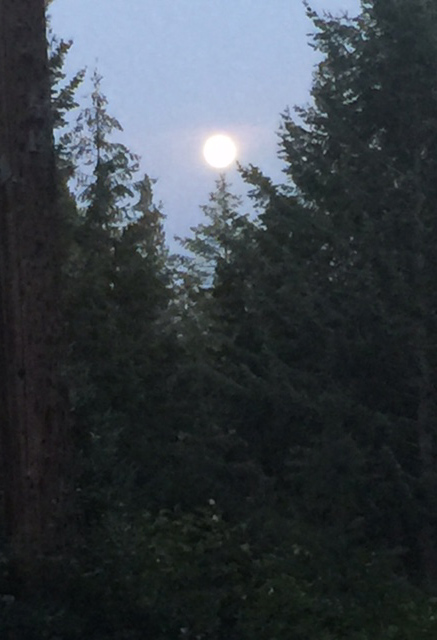 Moon above Deer Lake photo taken by S Crowell