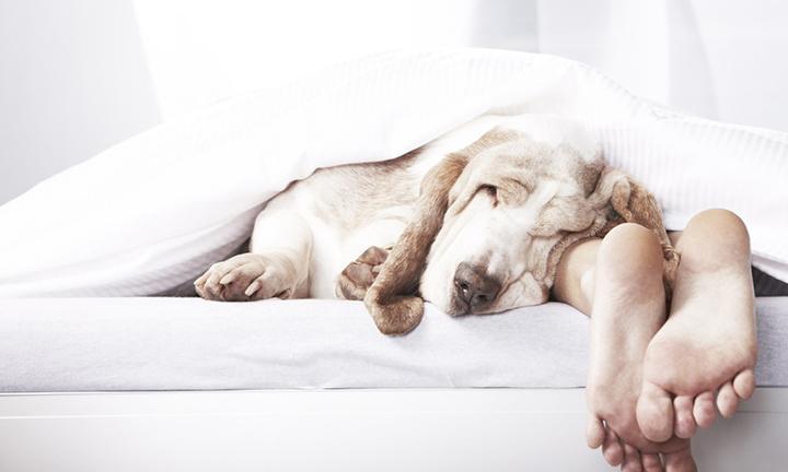 SLEEP IS PRECIOUS AND PRICELESS